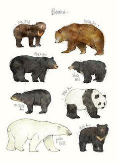 Bears - Amy Hamilton - Leinwandbild