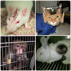 SPEAK OUT!  HELP END CRUEL & UNNECESSARY TESTS ON ANIMALS!  Urge the FDA to stop requiring cruel, unreliable tests on animals and to accept data from humane, non-animal methods instead.  Reliable, CRUELTY-FREE ALTERNATIVES are readily available, usually take less time to complete, cost only a fraction of what animal experiments cost, and produce safer and more effective drugs.  PLZ SIGN & SHARE!