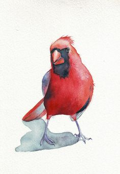 Cardinal ART Bird watercolor painting archival by Splodgepodge, $15.00