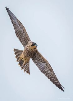 ❤❤ I DON'T KNOW THE TYPE OF BIRD THIS IS BUT IT'S AWESOME PHOTOGRAPHY! ❤❤