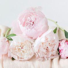 #peony my love  Im Mai steht sie im Mittelpunkt: die wunderschöne #pfingstrose! Eine meiner Lieblingsblumen (auf eine könnte ich mich niemals festlegen) und ein absoluter Klassiker im #brautstrauss  Die liebe Madita von @grace_and_flowers hat nicht nur diese süßen Pastellis mitgebracht, sondern auch einen Brautstrauß in strahlendem Koralle! Schaut mal rein!  Foto: @diana_frohmueller_photography  Tuch: @silkandpurl  #pfingstrosen #peonies #peonylove #frühling #pastell #hochzeit…