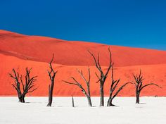 """Island of Silence and Heat"" Photograph by Carsten Krüger, National Geographic Your Shot  Ancient scorched trees sit anchored in the white-clay pan of Dead Vlei in Namibia in this National Geographic Photo of the Day."