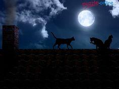 Dach, Koty, Noc, Księżyc