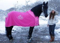 97##Lara ##Lara Equestrian, Horses, Animals, Animales, Animaux, Horseback Riding, Animal, Animais, Show Jumping