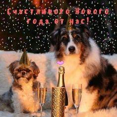 Новогодняя анимация для блогов и гостевых,посвященная именно 2018 году, году Собаки. С Новым годом! — Открытка для друзей Все гиф открытки у нас можно скачать и отправитьсвоим друзьям абсолютно бесплатно.