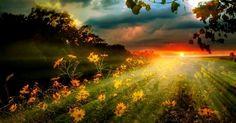 Sonnenuntergang über Blumenwiese