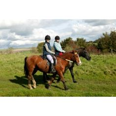 Own a Pony for a day experience