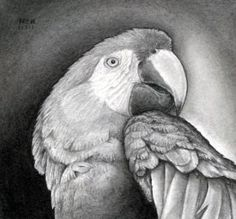 How to Draw a Realistic Parrot, Scarlet Macaw, Step by Step, Birds, Animals, FREE Online Drawing Tutorial, Added by finalprodigy, November 8, 2011, 9:51:52 pm