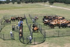 Our largest corral setup, this system includes the 180 degree Premier Sweep, an squeeze chute, and Calf Table with alley. Cattle Farming, Goat Farming, Show Cattle Barn, Cattle Ranch, Sheep House, Cattle Corrals, Raising Cattle, Farm Layout, Beef Cattle