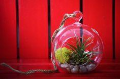 9GreenBox - Air Plant Tillandsia Bromeliads Terrarium Kit - Moss & Pebbles: Amazon.ca: Patio, Lawn & Garden