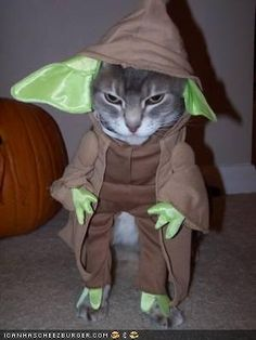 Unamused Cat in a Yoda Halloween Costume - Star Wars Cats Animal Costumes, Pet Costumes, Funny Cats, Funny Animals, Cute Animals, Crazy Cat Lady, Crazy Cats, Yoda Halloween Costume, Halloween 2013