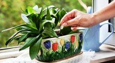 Tudtad, hogy az élesztőtől sokkal gyorsabban nőnek a szobanövények Hydroponic Gardening, Organic Gardening, Gardening Tips, Diy Hydroponik, How To Make Clay, Garden Care, Natural Forms, Balcony Garden, Houseplants