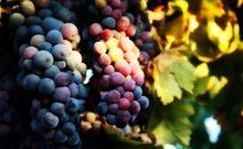 San Diego Wineries. September is California Wine Month, so let's celebrate the birthplace of California wine