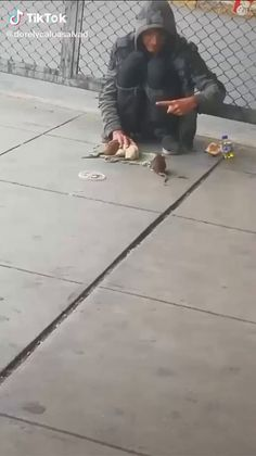 This homeless man has tamed and taught tricks to four rats. Animals Images, Animals And Pets, Baby Animals, Funny Animals, Cute Animals, Funny Animal Videos, Animal Memes, Animal Fails, Wtf Funny