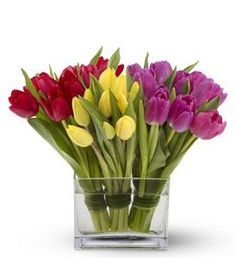"""""""The Three Dutchmen."""" A trio of tender tulips – three bunches of ten tulips each in brightly contrasting shades of red, yellow and purple, tied with bear grass – create a fresh, contemporary display when presented in a modern rectangular glass vase. A stunning floral arrangement for any occasion."""
