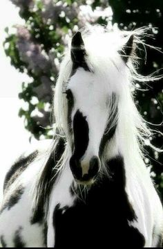 BLACK AND WHITE HORSE - ANIMALS ARE ADORABLE