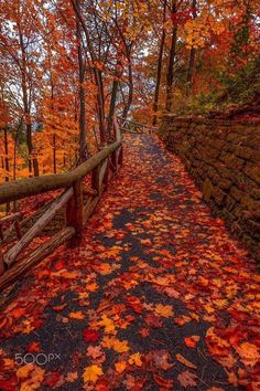 Discover and share the most beautiful images from around the world - Travel tips - Travel tour - travel ideas Beautiful Landscapes, Beautiful Images, Autumn Scenes, Autumn Aesthetic, Autumn Cozy, Shooting Photo, Seasons Of The Year, All Nature, Autumn Photography