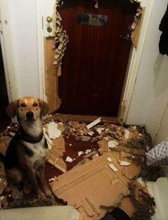 I just love how proud this dog looks of his handy work.