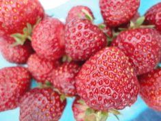 Strawberries in Finland. Summer. Garden.