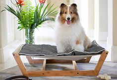 FURRY FINDS...  Pet Furniture, Animal Wall Art & More From purr-worthy to tail-wagging, this collection of accents and accessories delights furry friends of all kinds—and has a few treats in store for pet parents, too. #picsandpalettes #pet #jossandmain
