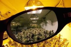 Grow Q&A: How Can I Protect My Eyes In My Marijuana Growroom?