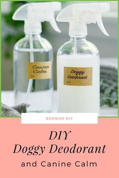Homemade Dog Odor Spray - diy dog odor spray deodorant canine calm You are in the right place about diy clothes Here we offer - Diy Pour Chien, Deodorant Spray, Dog Perfume, Diy Pet, Smelly Dog, Essential Oils Dogs, Dog Smells, Diy Tumblr, Dog Toys