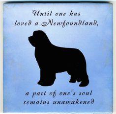 Newfoundland Dog Art Tile By Sharon Nummer