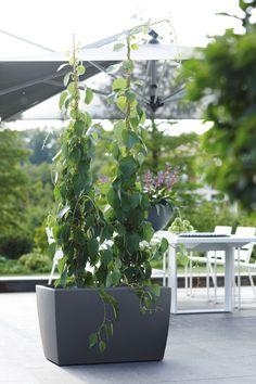 how to use long pots?  design flower pots TerraForm