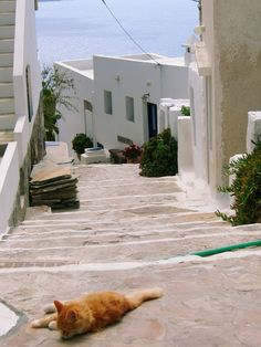 milos-plaka Greece Greece Vacation, Beautiful Places To Visit, Greek Islands, I Love Cats, Paths, The Good Place, In This Moment, Venus, Traveling