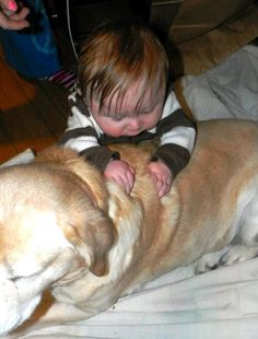 Dogs and New Babies � Tips to Help Baby and Dog Bond