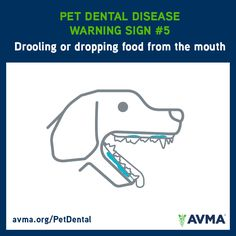 A pet that is drooling or dropping food from his or her mouth might have dental disease and should be examined by a veterinarian. For more information about pet dental health and the importance of preventive care, visit avma.org/PetDental.