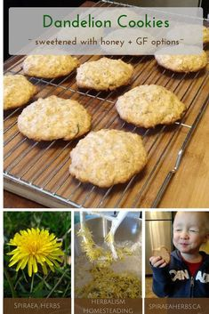 Dandelion Flower Cookies - sweetened with honey + GF options Dandelion Recipes, Cookie Recipes, Dessert Recipes, Flower Food, Dandelion Flower, Dandelion Jelly, Crockpot, Biscuits, Vegan Recipes