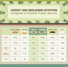 Eating Insects: Meal