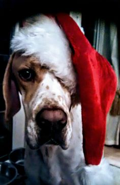 Odie says 'It's beginning to look a lot like Christmas'