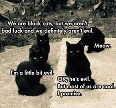 We are black cats, but we aren't bad luck and we definitely aren't evil.