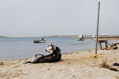 Dog-Friendly Vacationing in Montauk, New York , Dog, Cat and other Pet Friendly Travel Articles