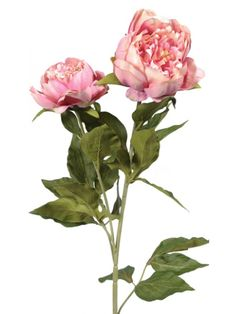 Artificial - Peony Double Spray - Antique Pink £5.76