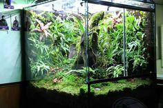 Pin by Karpat Deviren on Terrariums Paludariums Terrarium For Sale, Gecko Terrarium, Aquarium Terrarium, Sea Aquarium, Terrarium Plants, Planted Aquarium, Reptile House, Reptile Room, Aquariums