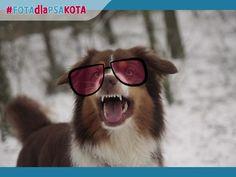 Hej! Wgryzłem się w konkurs #fotadlapsakota! Chcę pomóc zwierzakom i przy okazji chapsnąć nagrodę! Jeżeli możesz, proszę oddaj głos na moją fotę, okaż wsparcie dla zwierzaków lub sam weź udział w konkursie… Być może i Ty nagrodę będziesz miau… ;-)