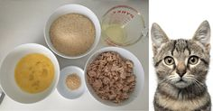 How to make healthy homemade cat food bulk for diabetic and non here are some awesome homemade cat food recipes that can help to save you money by making your own homemade cat food both your wallet and cat will thank forumfinder Images