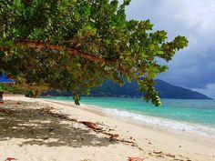 Takamaka trees in Beau Vallon beach. Alberi di takamaka sulla spiaggia di Beau Vallon  #inviaggiodasola #travelblogger #travelblog #seychelles #beauvallon #igersseychelles #visitseychelles #sea #amazing #travel #viaggi #palm #sunday