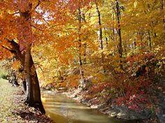 A brook near Springfield, TN in the fall