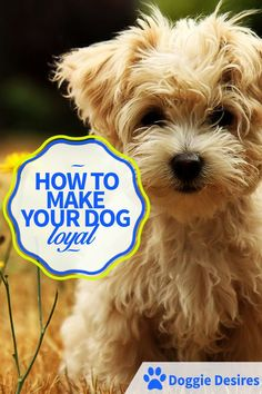 How To Make Your Dog Loyal >> http://doggiedesires.com/how-to-make-your-dog-loyal/