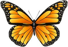 Orange Butterfly PNG Clip Art in category Insects PNG / Clipart - Transparent PNG pictures and vector rasterized Clip art images. Butterfly Images Clip Art, Butterfly Drawing, Butterfly Pictures, Butterfly Painting, Butterfly Watercolor, Butterfly Crafts, Butterfly Kisses, Butterfly Wings, Tribal Butterfly Tattoo