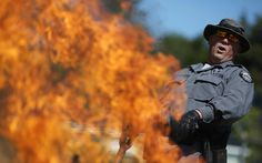 A state trooper reacts as flames rise from illegal marijuana plants seized by the Kentucky State Police Cannabis Suppression Branch in Bronston, Kentucky