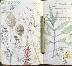 Lara Gastinger Nature Sketchbook Journal Pages August 20-26