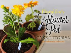 Incredibly realistic and sure to impress gardeners and cake lovers alike, this flower pot cake tutorial offers clear, step-by-step. Flower Cake Design, Flower Pot Cake, Flower Pots, Fondant Flower Tutorial, Fondant Flowers, Cake Tutorial, Square Cupcakes, 7th Birthday Cakes, Cake Decorating For Beginners