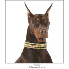 BRASS STUD LEATHER COLLAR