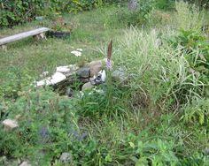 Один из незаменимых атрибутов отдыха в саду – это, конечно же скамейка. Она способствует не только украшению вашего сада, но и удобному времяпрепровождению в нем. Ведь сад – это своего рода тоже дом и хочется, чтобы находиться в нем было приятно.