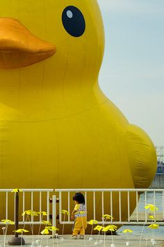 Huge rubber duck installation, Osaka, Japan
